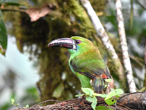 EcuadorBird.jpg