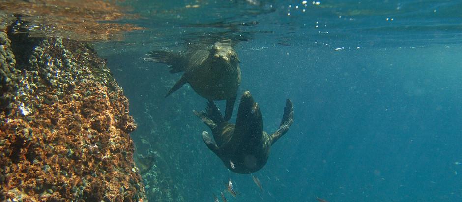 Cruising the Galapagos
