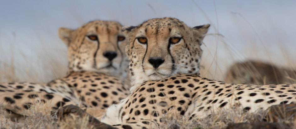 A First- Timer's View of Safari: Ensuring It Won't be the Last! Submitted by  a Traveler