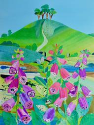 Foxgloves, Colmer's Hill