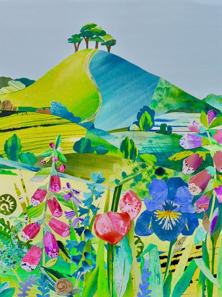 Iris, Colmer's Hill
