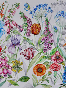 Foxgloves and friends