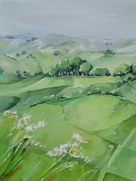 SOLD Cow Parsley, Eggardon hill.