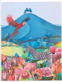 Zebra, Colmer's Hill