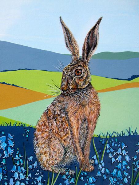 Hare, Colmer's Hill