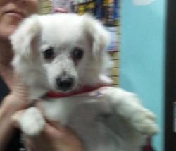 Phoebe-dog