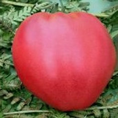 Coeur de boeuf Rose