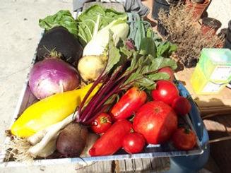plants de légumes bio ensoleillés.JPG