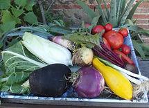plants de légumes bio.JPG