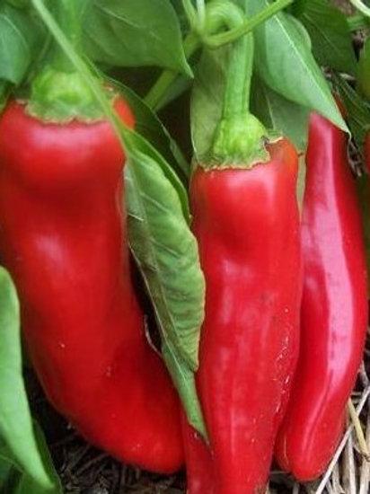 Poivron rouge Corno di Toro