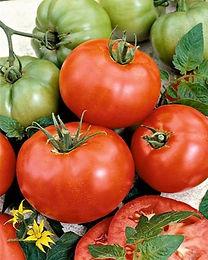 tomate-ace-55-vf_edited.jpg