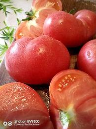 plant de tomate bio grosse russe rose.jp