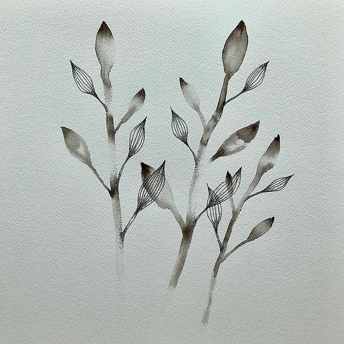 "Sepia botanical 2    (11"" X 12"")"