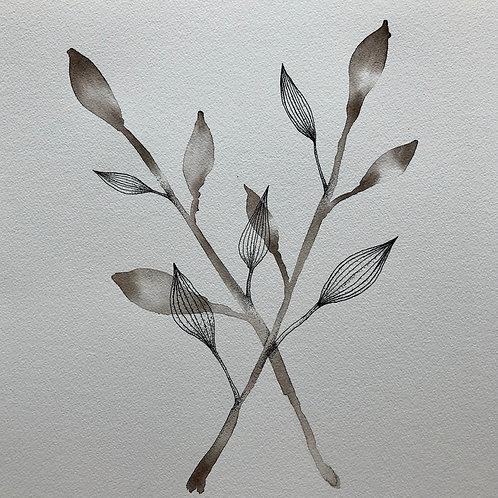 "Sepia botanical    (11"" X 12"")"
