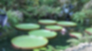 cedar lakes2.jpg