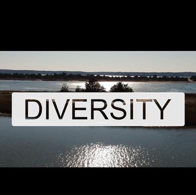 diversity web-02.png