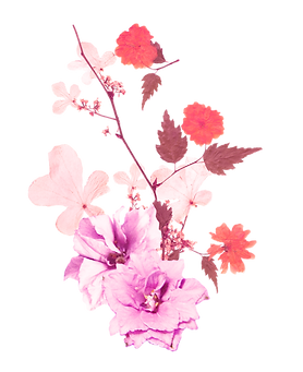 Poppy Flowers 3.png