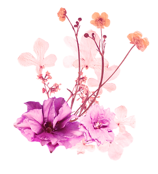 Poppy Flowers 2.png
