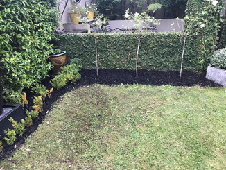 Challenger Street garden after with mulched bark