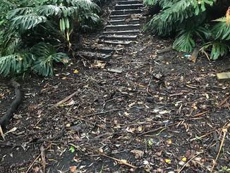 Tarawera Terrace stairs before