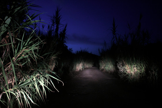 Night Drive, Kalo Nero