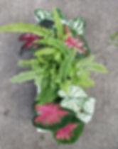 result_1590504790834_edited.jpg