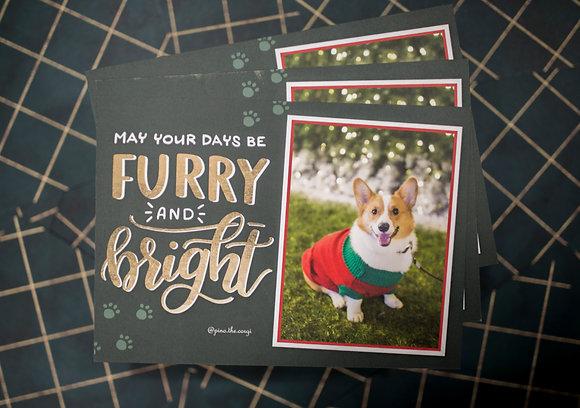 Pino Post Card - Furry & Bright