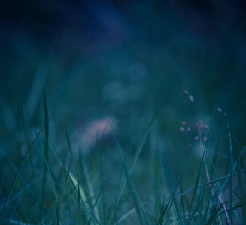 grass.jpeg