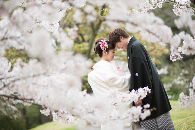 桜&ロケフォト