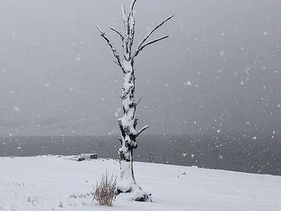 The 50% tree at Lake Eucumbene - August