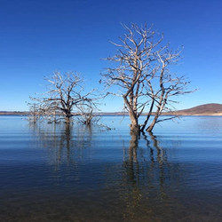Stuart Meyers - Old Adaminaby - Lake Euc