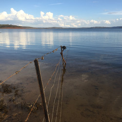 Old Fence at Old Adaminaby - Lake Eucumb