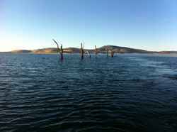 Lake Eucumbene Trees in the water