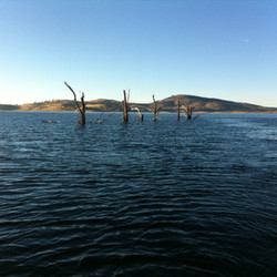 Lake Eucumbene Trees in the water.JPG