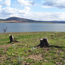 Lake Eucumbene Trees - Trout Island.JPG