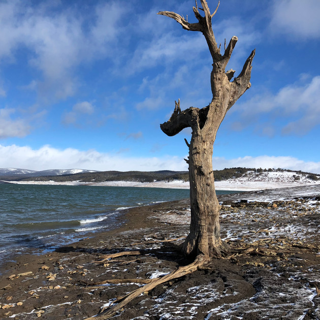 Tree at Trout Island - Lake Eucumbene 21