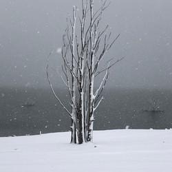 Lake Eucumbene Trees - heavy snow.JPG