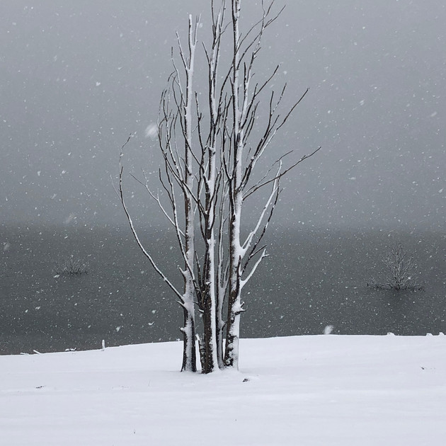 Lake Eucumbene Trees - heavy snow.JPG