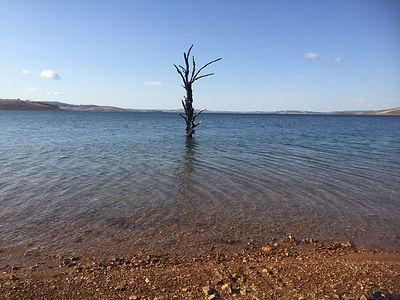 Old Adaminaby - 50% tree - Aug 2015.JPG