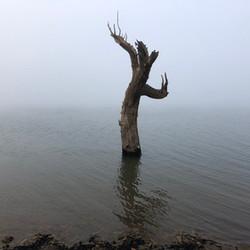 Tree on Trout Island - Lake Eucumbene.JP