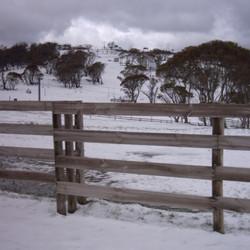 selwyn_snow.JPG