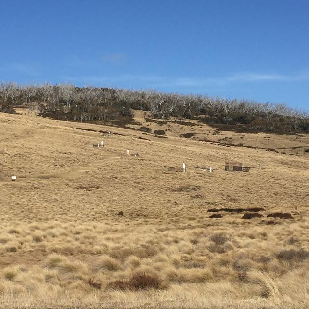 Graves at Kiandra NSW.JPG