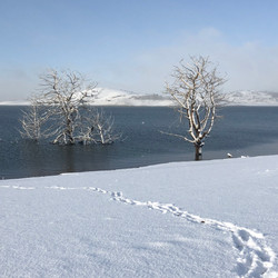 Lake Eucumbene Trees - in snow at Old Ad