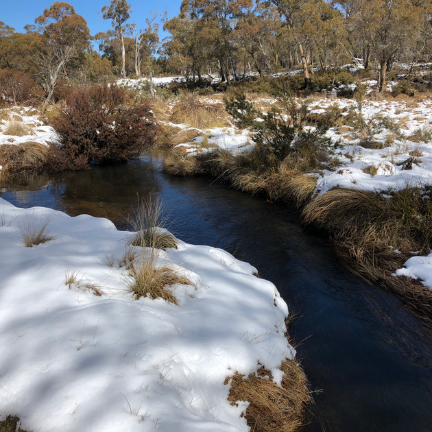 Snow at Gang Gang Creek - Lake Eucumbene