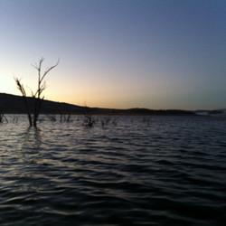 Lake Eucumbene Trees - sunset.JPG
