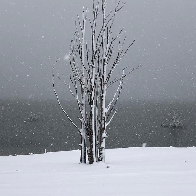 Snowy trees - Old Adaminaby.JPG