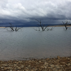 Yens Bay trees as storm approaches.JPG