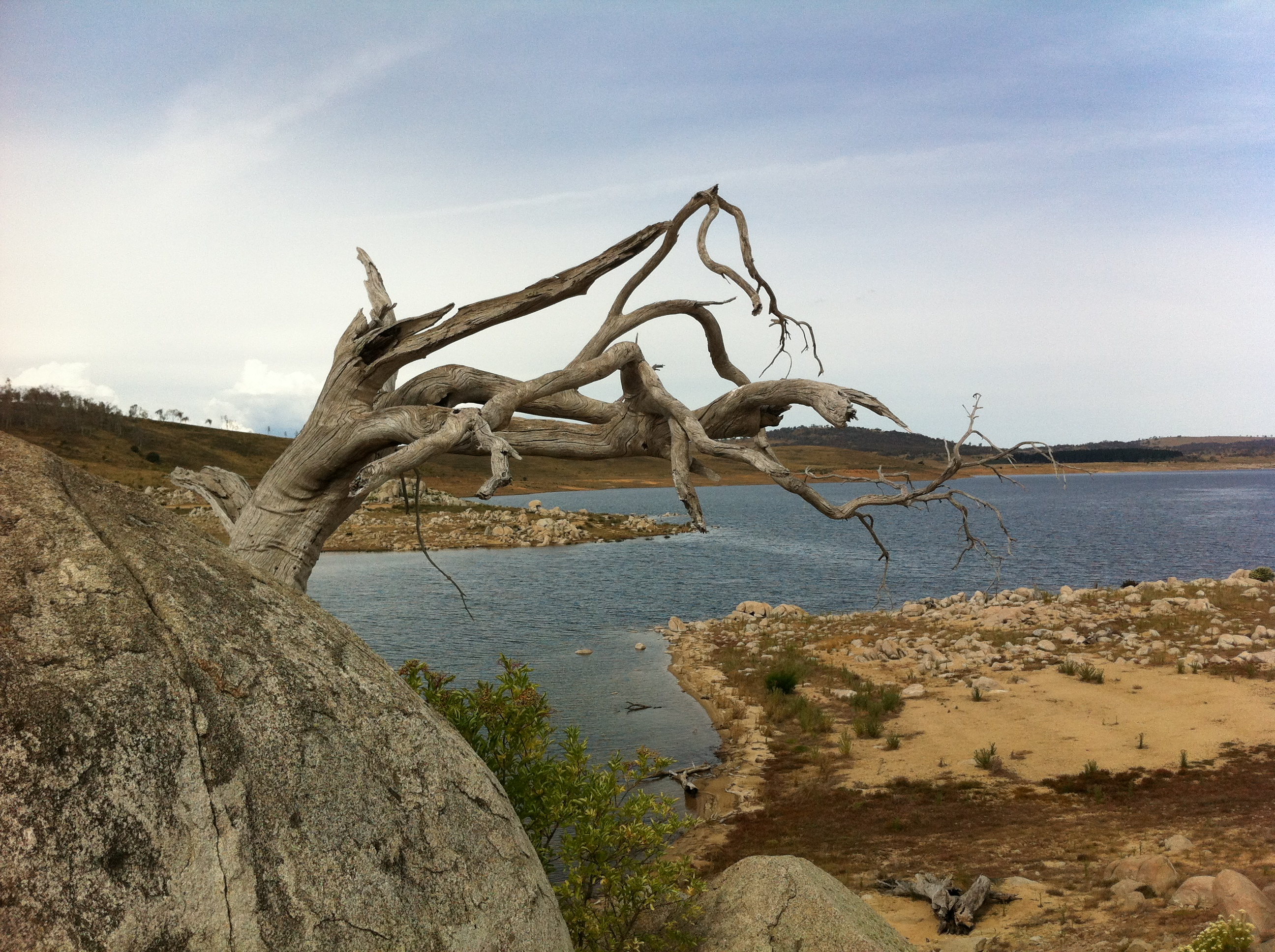 Amazing tree formation on Swan Island -