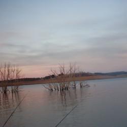 Lake Eucumbene Trees - fishing.JPG
