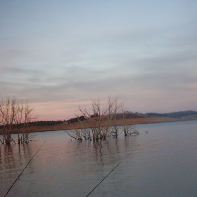 Lake Eucumbene Trees - fishing.JPG